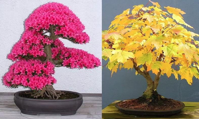 نباتات واشجار خلابه لم تشاهد مثلها سابقا Nabatat.3